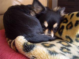 我が家の愛犬日記