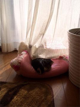愛犬、頭隠して尻隠さず